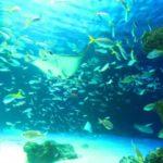 海の素潜りで息を長く持たせるマル秘テクは?海中世界を楽しもう!
