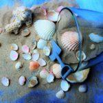 絶対楽しい!?海水浴に行ったら貝殻拾いも!オススメスポットをご紹介!